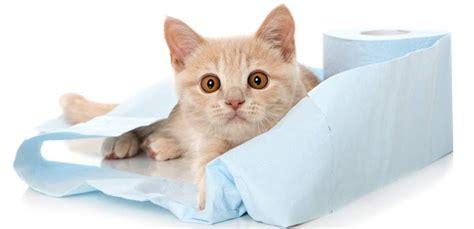 blasenentzuendung bei der katze erkennen heilen