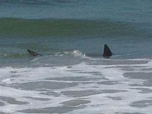 Shark 'Came Out of the Water' When It Bit Off Teen's Arm ...
