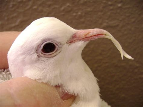 We provide grooming services for all types of birds and