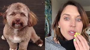 THIS DOG THAT LOOKS LIKE A HUMAN IS SCARY AS HELL!   Hey ...