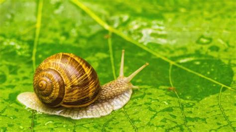 World's Loneliest Snail, Lonely George, Has Died
