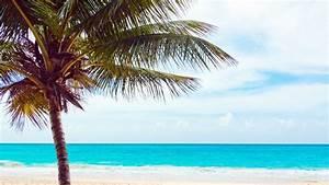 Bilder Meer Strand : kostenlose illustration palmen strand meer delfin ~ Eleganceandgraceweddings.com Haus und Dekorationen