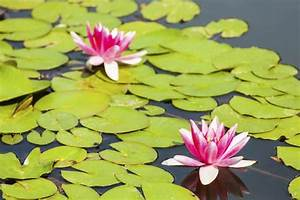 Wasserpflanzen Teich Kaufen : wasserpflanzen teich employee leave request form template ~ Michelbontemps.com Haus und Dekorationen