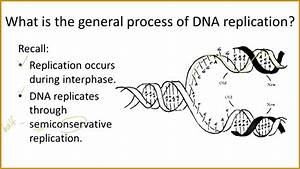 4 Dna The Secret Of Life Worksheet Answers