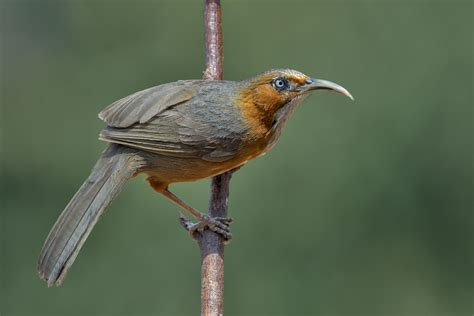 Uttarakhand Birds Uttarakhandi