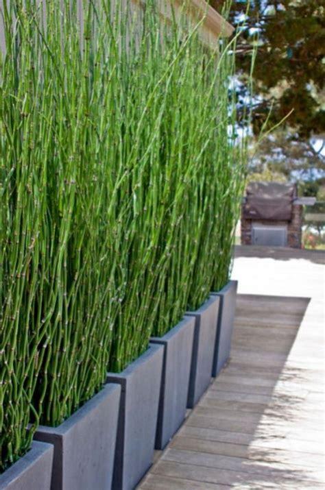 Bambus Sichtschutz Pflanzen by Bambus Als Sichtschutz Im Garten Oder Auf Dem Balkon