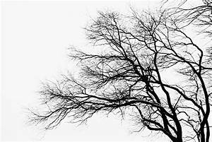 Bare Tree Silhouette Photograph by Larry Ricker