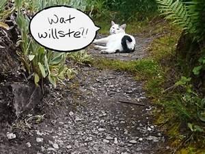 Katze Im Garten Begraben : hund oder katze was soll ich mir holen sind katzen oder ~ Lizthompson.info Haus und Dekorationen