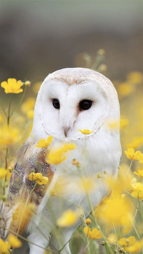 owls wallpapers high quality
