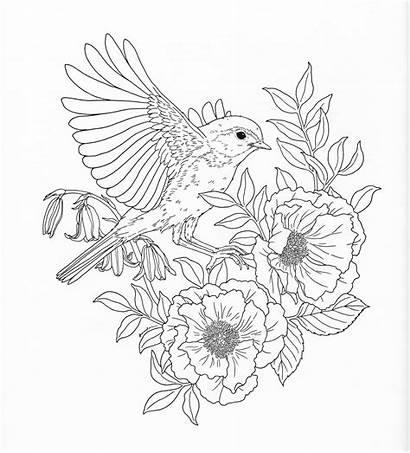 Coloring Nature Pages Adult Flower Printable Sheets
