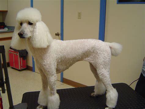 dog grooming wallpaper gallery