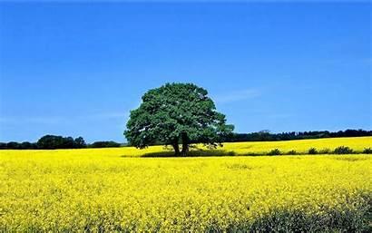 Tree Yellow Trees Meadow Wallpapers Field Sky