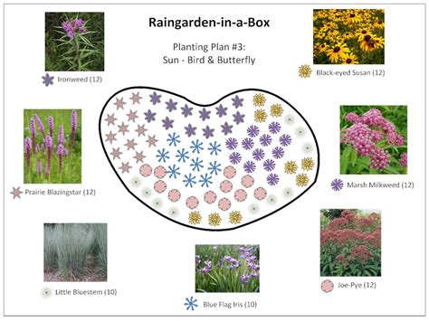 plant by numbers garden design raingarden in a box designs prior lake spring lake watershed district