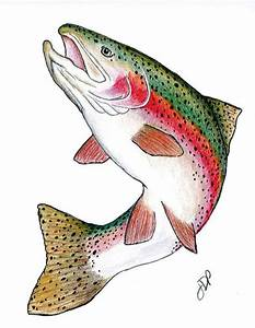 rainbow trout drawing template | currently a drawing of ...