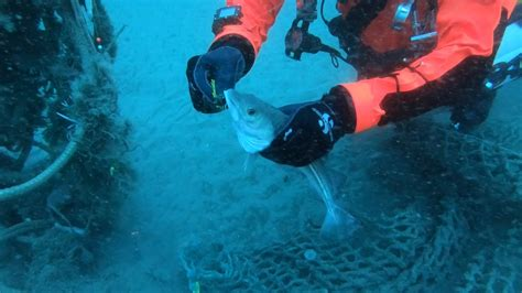 healthy seas ghost fishing divers kicked  north sea