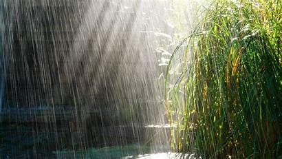 Rain Heavy Bushes