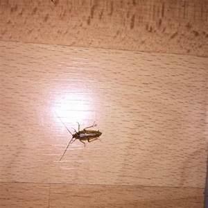 Mückennester In Der Wohnung : waldschabe oder doch das schlimmere bel wohnung ~ Watch28wear.com Haus und Dekorationen