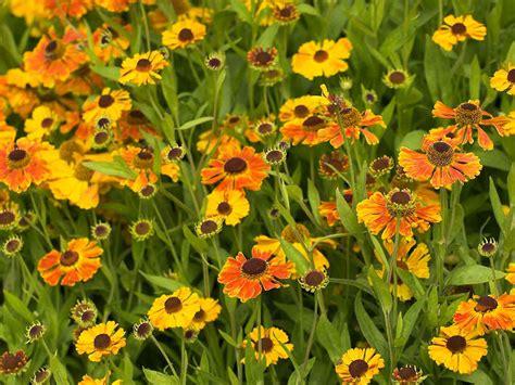 10 Best August-peaking Plants