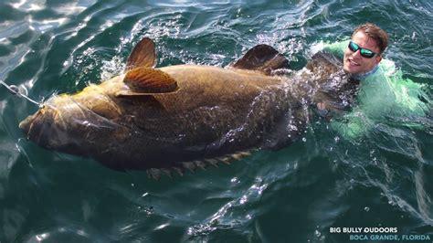 grouper goliath catch