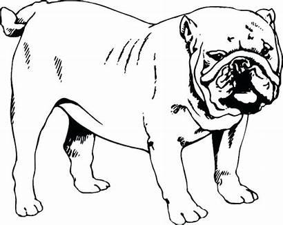 Bulldog Coloring Pages English Printable Dog Pug