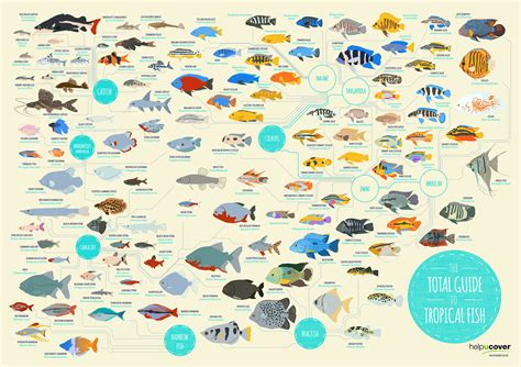 tropical fish list  species infographic