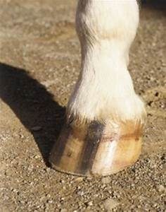 5 Things That Can Lead Repeated Hoof Abscesses