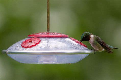 hummingbird feeder tips easily stop hummingbird feeder leaks