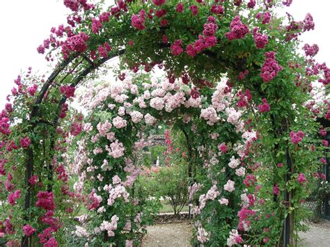 beautiful roses garden french beauty mark the rose garden at l hay les roses paris