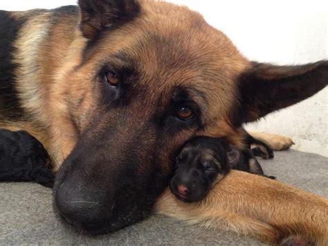 fotografias de perros parecidos  sus cachorros