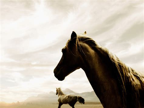 Horse Quotes With White Backgrounds. Quotesgram