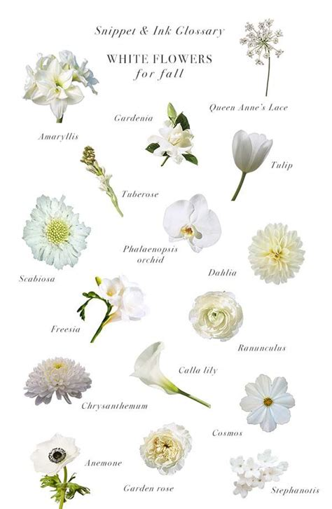 white flowers  fall weddings snippet ink glossary
