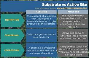 Difference Between Substrate And Active Site