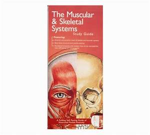 Muscular And Skeletal System Pocket Study Guide