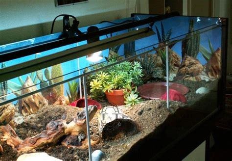 exemples de terrariums vitrine ik a