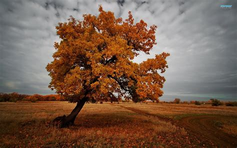See more ideas about tree wallpaper phone, tumblr stickers, aesthetic stickers. The tree in the dark autumn wallpapers and images - wallpapers, pictures, photos
