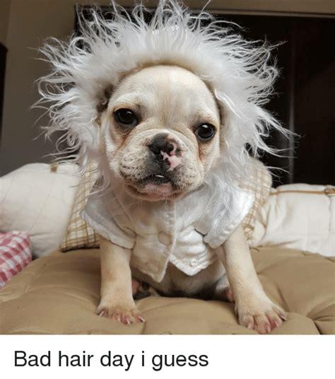 Bad Hair Day Meme - 25 best memes about bad hair bad hair memes