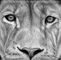 Lion Face Pencil Drawing