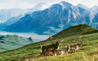 Arctic Wildlife Preserve to become drilling field