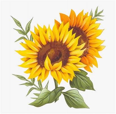 Sunflower Vector Background Transparent France Cuisine Recipe