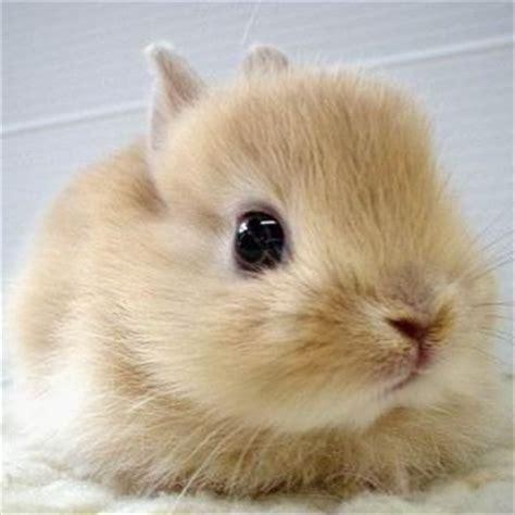 Rabbit Facts - Animal Facts Encyclopedia