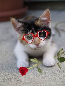 Valentines Day Quotes With Kittens. QuotesGram
