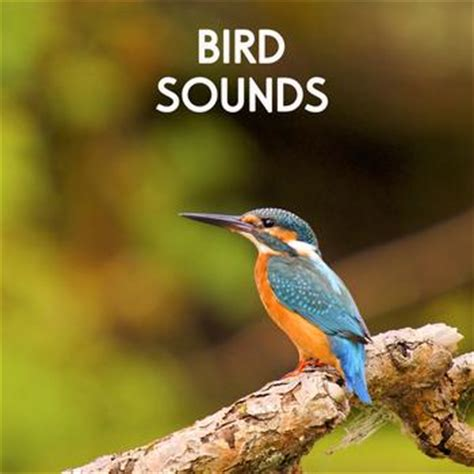 bird sounds morning birds for sounds of nature