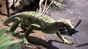 Petrolacosaurus | Walking With Wikis | Fandom powered by Wikia