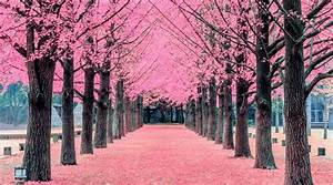 The Beaches is getting its very own cherry blossom tree