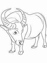Buffalo Coloring Wild Pintable Wings Bài Viết Từ sketch template