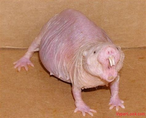 Ugliest Animal on Earth Amazing Extreme Odd