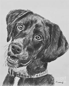 Black Lab Puppy Charcoal Sketch Drawing by Kate Sumners