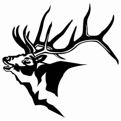 Elk Head Drawing Clipart Moose Decals Coloring