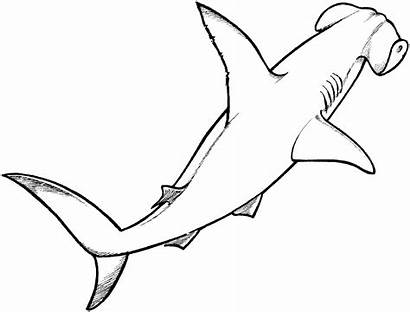 Shark Coloring Pages Hammerhead Animals Drawings