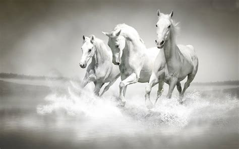 horses animals hd horse fanpop wallpapers pc running
